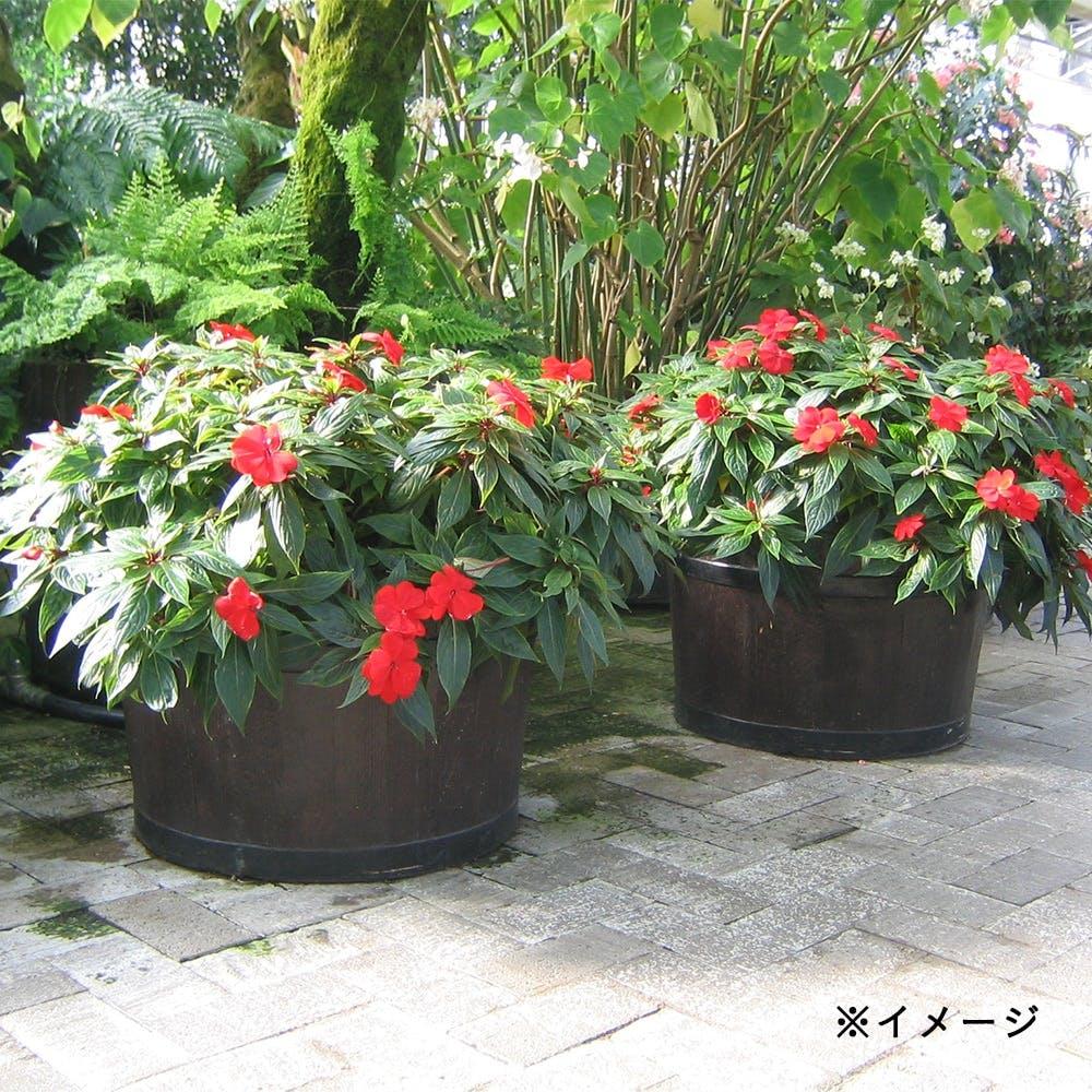 モルトプランター 58型 ダークブラウン【別送品】, , product
